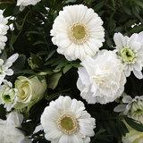 Springtime White