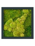 Mosschilderij 700 x 700 mm