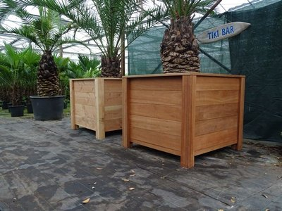 Plantenbak met palm