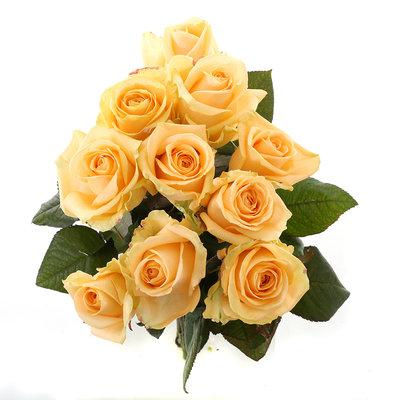 Roos Peach Avalanche Small (10 stuks)(Roos Peach Avalanche Small (10 stuks))