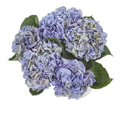 Hortensia(Hydrangea)