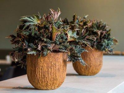 Plantenbak Corten Look - Pot ruw