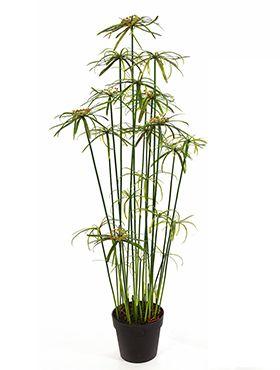 Kunstplant - Papyrus alternifolius