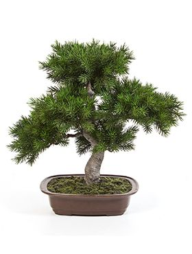 Kunstplant - Pinus bonzai
