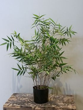 Kunstplant - Oriental bamboo tree