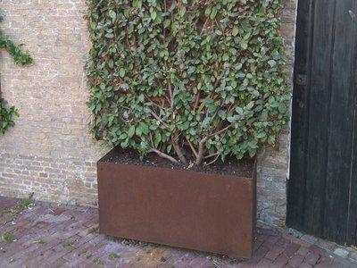 Haagbak cortenstaal