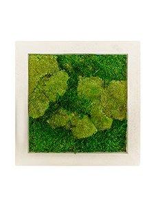 Mosschilderij 50 x 50 cm