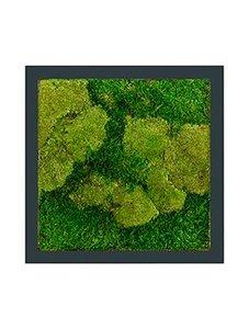 Mosschilderij 500 x 500 mm