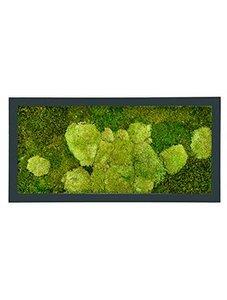 Mosschilderij 1000 x 500 mm